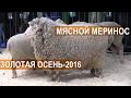 Российский мясной меринос на выставке Золотая Осень-2016