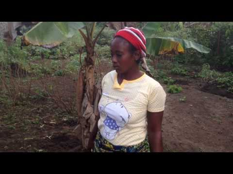Harvesting cassava for dinner at the Heartwood Orphan Home in Liberia