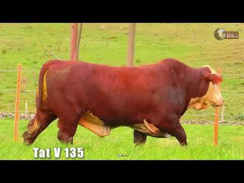 LOTE 23   TAT V135 BRAFORD SÃO BENTO 2 ANOS