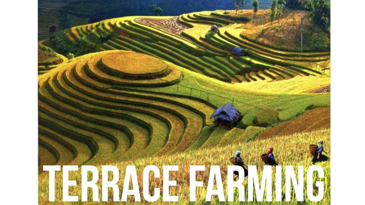 Terrace farming youtube for Terrace images