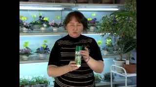 7_Удобрения и подкормки. Уход за комнатными растениями.Часть 6(Мы хотим познакомить вас с тем, как правильно выращивать комнатные растения. Ответить на возникающие у..., 2014-05-17T12:55:11.000Z)