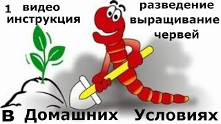 1. Инструкция выращивания червей в домашних условиях. Все секреты разведения дождевых червей.
