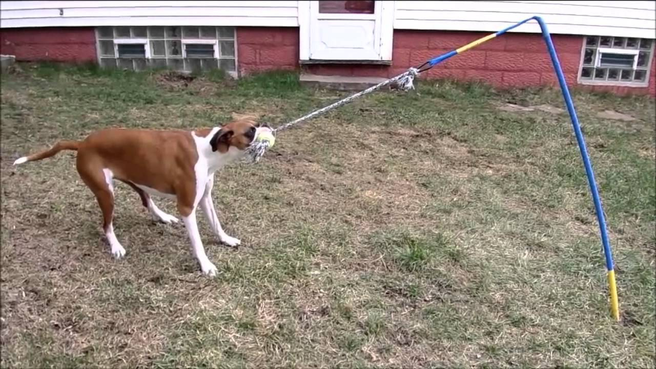tether tug the best interactive dog toy youtube