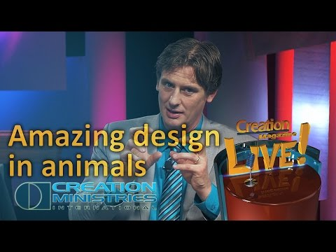 Amazing design in animals (Creation Magazine LIVE! 4-10)