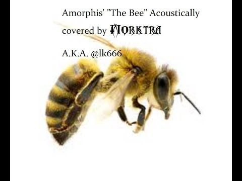 "Acoustic Cover of Amorphis' ""The Bee"""