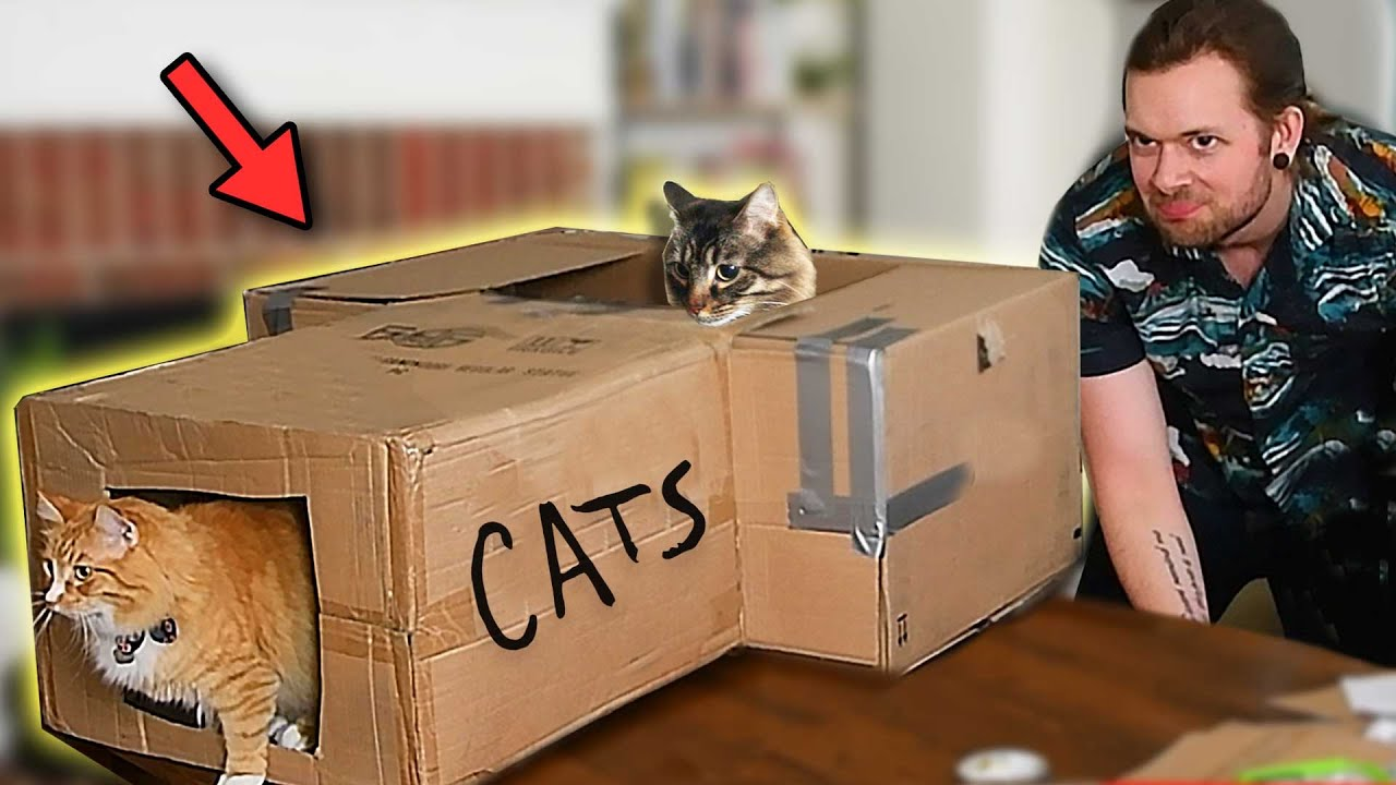 Building a Box Fort for my Cats