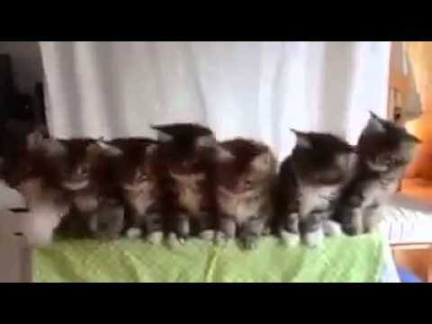 Sweet Dancing cats