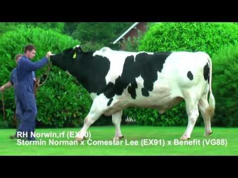 RH NORWIN rf (EX90) - Stormin Norman x Comestar Lee (EX91) x Benefit (VG88) - July 2013
