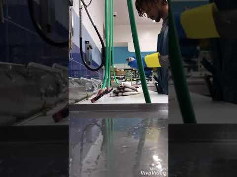 12 pound Salmon Cleaning & 1 Dozen Grunt fish scaling south Florida market