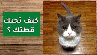 5 أشياء تجنبها لتحبك قطتك، كيف تحبك القطط ؟