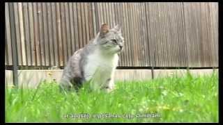 Лечение домашних животных