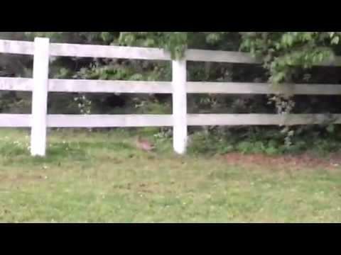 Chasing A Bunny In The Front Yard In Georgia