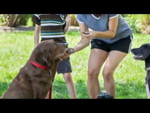 Dog Bite Liability Insurance: Dog Park Etiquette