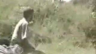 Chimps Attack Man Youtube