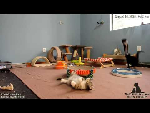 Five Guys Kittens - Flying Tomato (slo-mo)