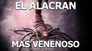 La Leyenda De El Alacran De Durango - VENENO MORTAL