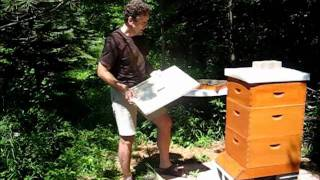 Backyard Beekeeping Part 11(S1:E11): Ventilation Rim