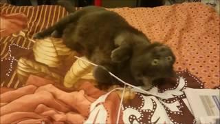 #1064 Россия Петербург Любителям кошек Красавица ЭлДжи