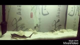 Грунт песок в моём аквариуме