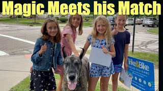 Magic the Great Dane meets the Big Dog