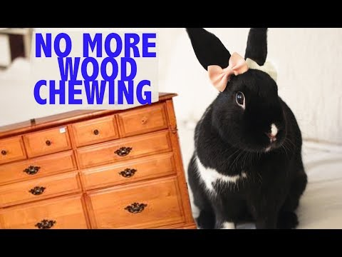 Stop Your Bunny From Chewing Your Wooden Furniture Hack