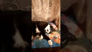 Говорящий кот Маврик,ему 17 лет