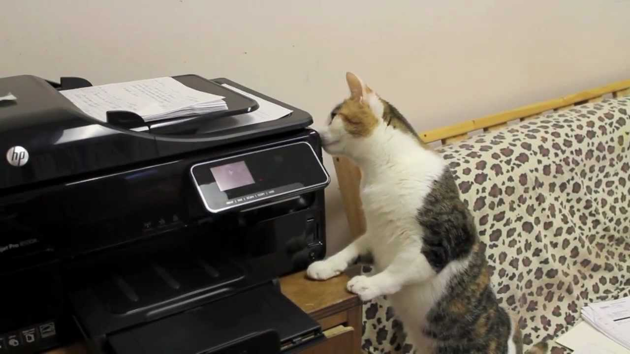 cat obsessed with printer