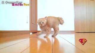Смешные коты и кошки: на радость зрителям /