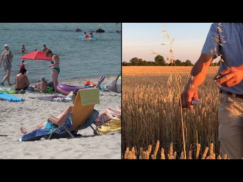 Rekordtemperaturen in Deutschland: Fluch und Segen der Hitzewelle