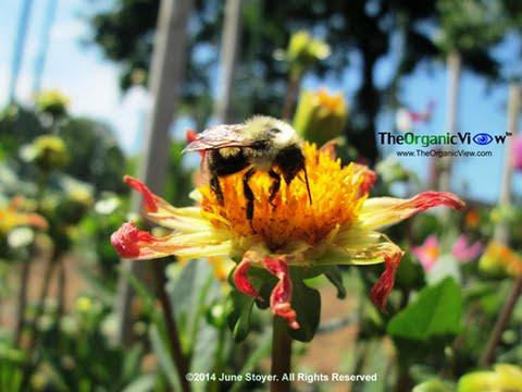 EPA Listening Session on Pollinator Strategy- Part 1 Nov 12, 2014