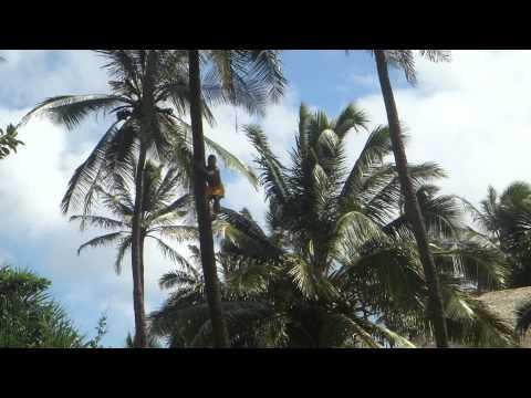 """The Polynesian Cultural Center - """"Samoa"""""""