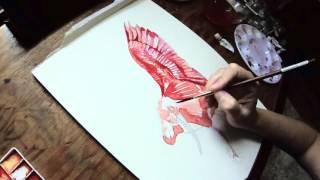 Scarlet Ibis (Watercolour)