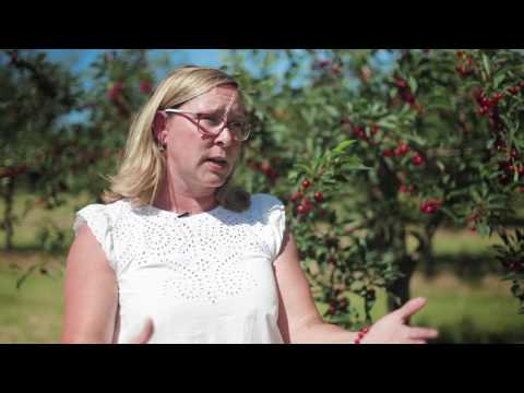 Fruit and Vegetable Crop Management at MSU IAT/Northwestern Michigan College