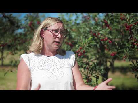 Fruit and Vegetable Crop Management at MSU IAT/Northwestern Michigan College