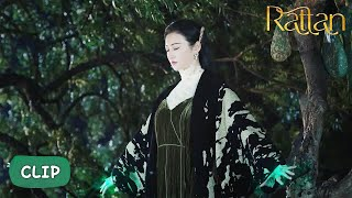 Si Teng's Power?! Will She Find Bai Ying This Time?   Rattan