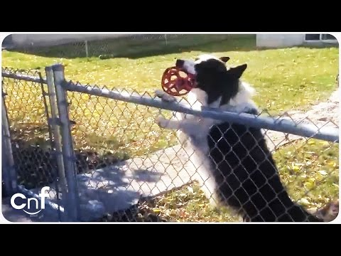 Dog Tricks Pedestrian to Play Fetch
