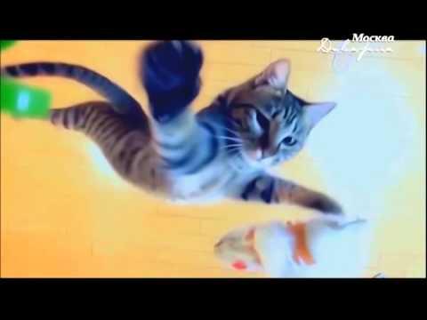 Вопрос: Почему коты всегда приземляются на все четыре лапы?
