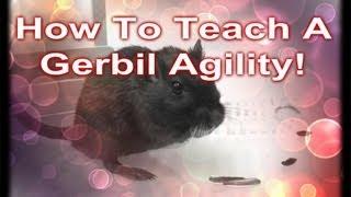 How To Teach A Gerbil Agility!