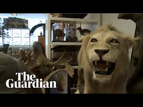 Taxidermy for beginners youtube taxidermy for beginners solutioingenieria Choice Image