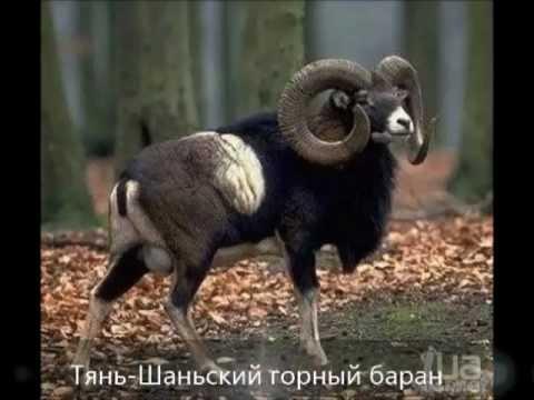 Красная книга казахстана