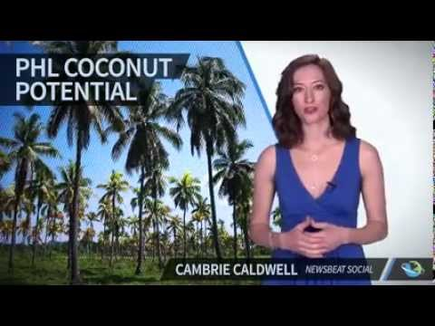 Philippines Is The Second Biggest Coconut Exporter In The World