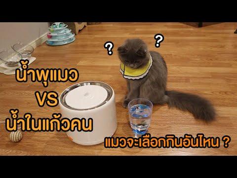 น้ำพุแมว VS น้ำในแก้วคน แมวจะเลือกกินอันไหน??