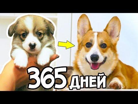 Вопрос: Как ухаживать за своей собакой?