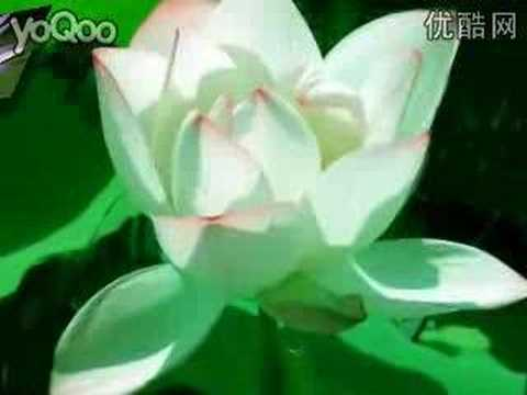 Beautiful Buddhist Music_云水禅心