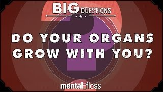 Do your organs grow with you? - Big Questions - (Ep. 20)