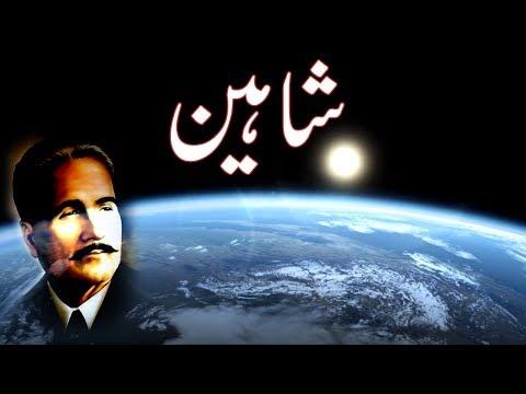 Shaheen | Allama Iqbal | Urdu Ghazal | Sad Poetry | Love Poetry