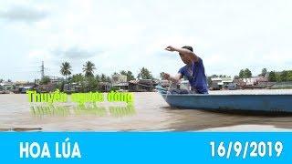 Thuyền ngược dòng   HOA LÚA - 16/9/2019 Thuyền ngược dòng   HOA LÚA - 16/9/2019