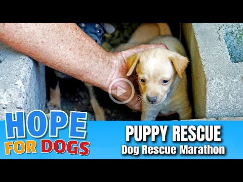 Hope For Paws Rescue Puppies Under Garage