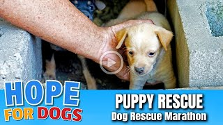 Hope Rescues Puppies Under Garage