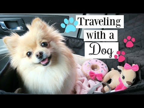 Road Trip with Daisy | How To: Traveling with a Dog \ Pomeranian